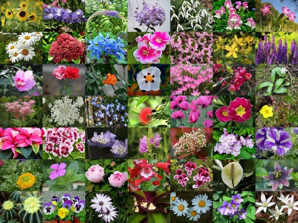 Florile Si Lunile Anului
